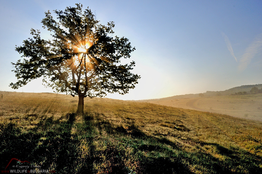 Yabylkovo-Tree-Sunrise