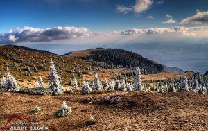 Към Амбарица - заскрежени иглолистни дръвчета в близост до вр. Амбарица (Стара планина)