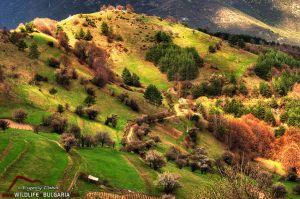Родопи - пролетен пейзаж